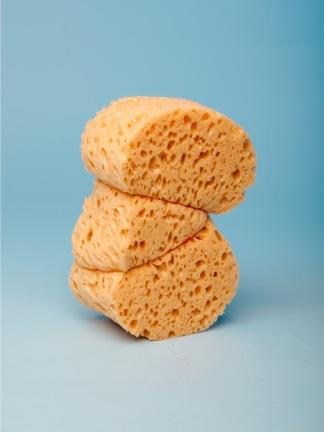 59160_sponges.jpg