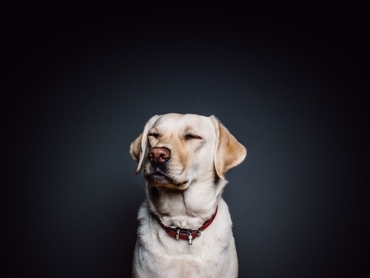 64452_wall-animal-dog-pet.jpg