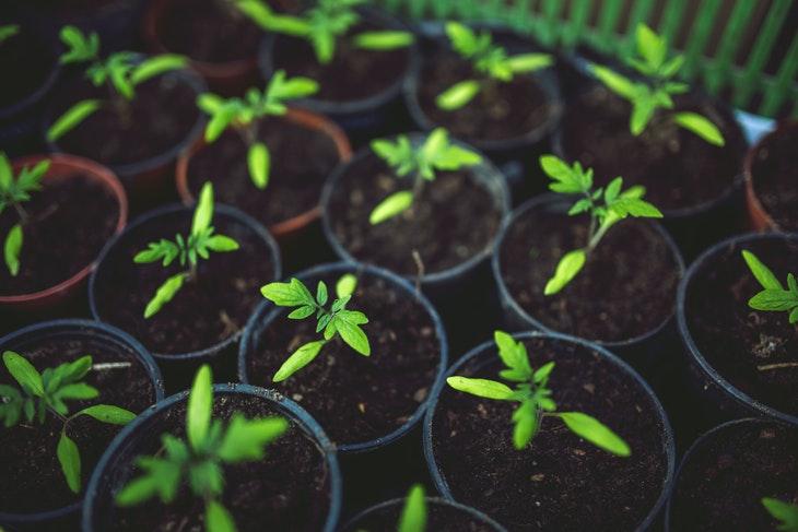 64455_food-healthy-vegetables-village.jpg