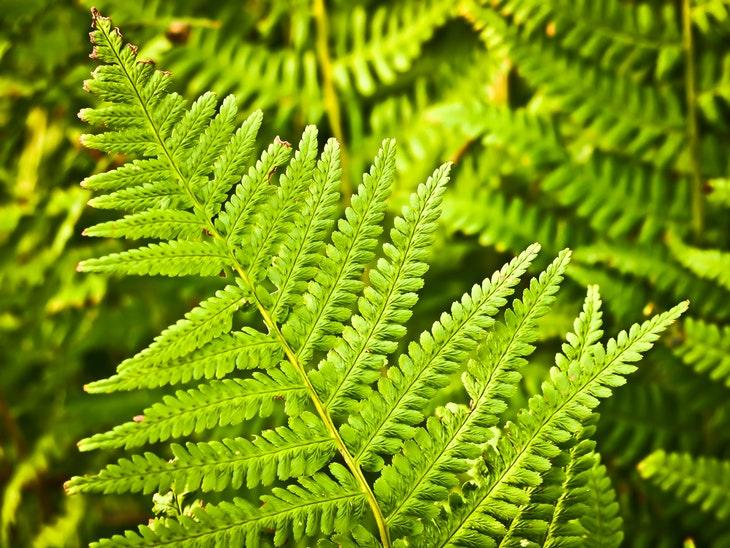 64550_fern-nature-green-plant.jpg